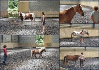 eponaquest, medicine horse way, carol roush, le tao du cheval, linda kohanov, le pouvoir des chevaux, now, equicoaching, carole thomas