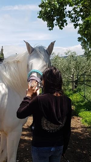 Eponaquest, medicine horse way, linda kovanov, tao du cheval, voie du cheval, carole thomas, equi coaching