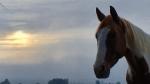 linda kohanov,carole thomas,instructeur epona quest,le tao du cheval,cheval,developpement personnel,france,ile de france,paris,equi coaching,equitation ethologique,relation homme cheval
