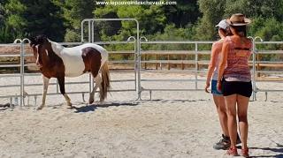 communication sentiente, programme NOW, eponaquest, linda kohanov, carol roush, carole thomas, le pouvoir des chevaux, medicine horse way, equicoaching, horsecoaching, developpement personnel, cheval