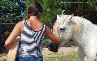 programme NOW, eponaquest, linda kohanov, carol roush, carole thomas, le pouvoir des chevaux, medicine horse way, equicoaching, horsecoaching, developpement personnel, cheval