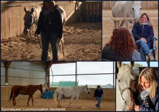 communication sentiente, eponaquest, linda kohanov, carol roush, carole thomas, le pouvoir des chevaux, medicine horse way, equicoaching, horsecoaching, developpement personnel, cheval