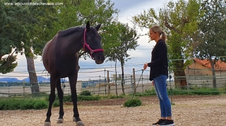 communication sentiente, programme NOW, eponaquest, linda kohanov, carol roush, carole thomas, le pouvoir des chevaux, medicine horse way, equicoaching, horsecoaching, developpement personnel, cheval